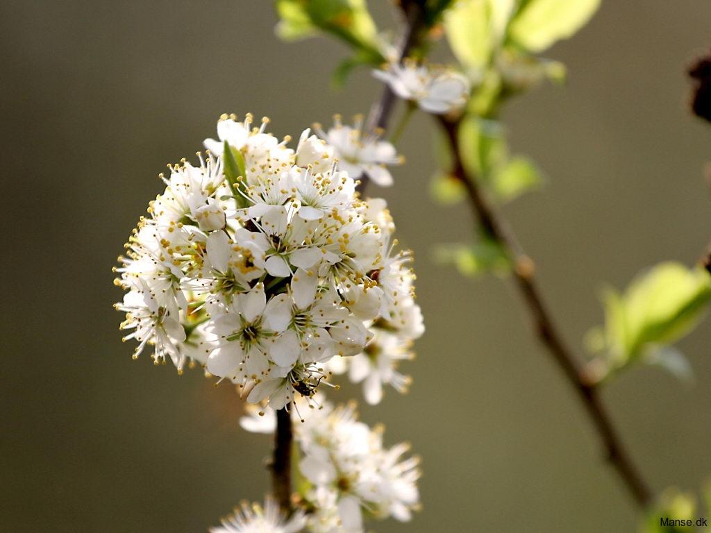 blom_05