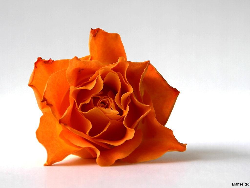 blom_06