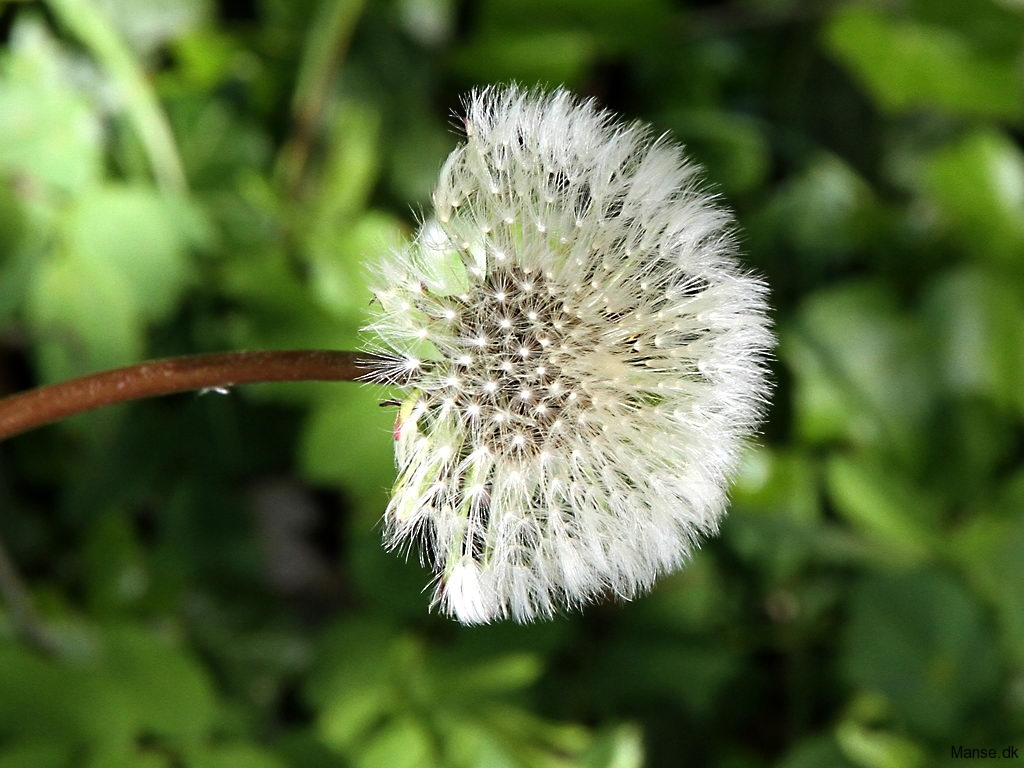 blom_07