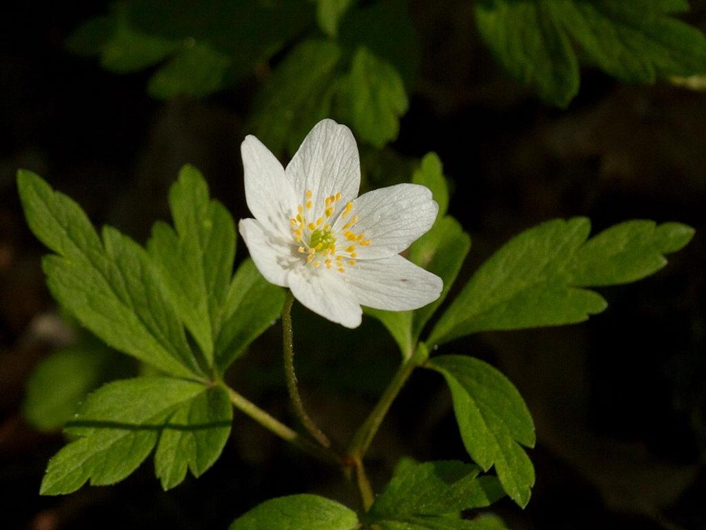 blom_12