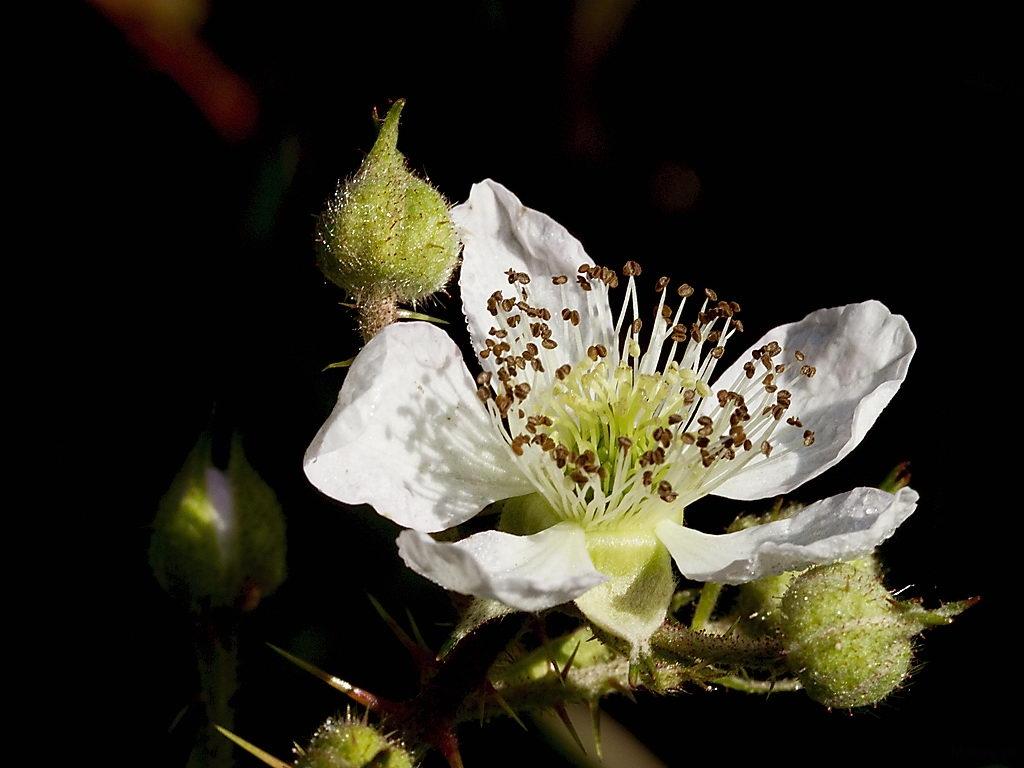 blom_19