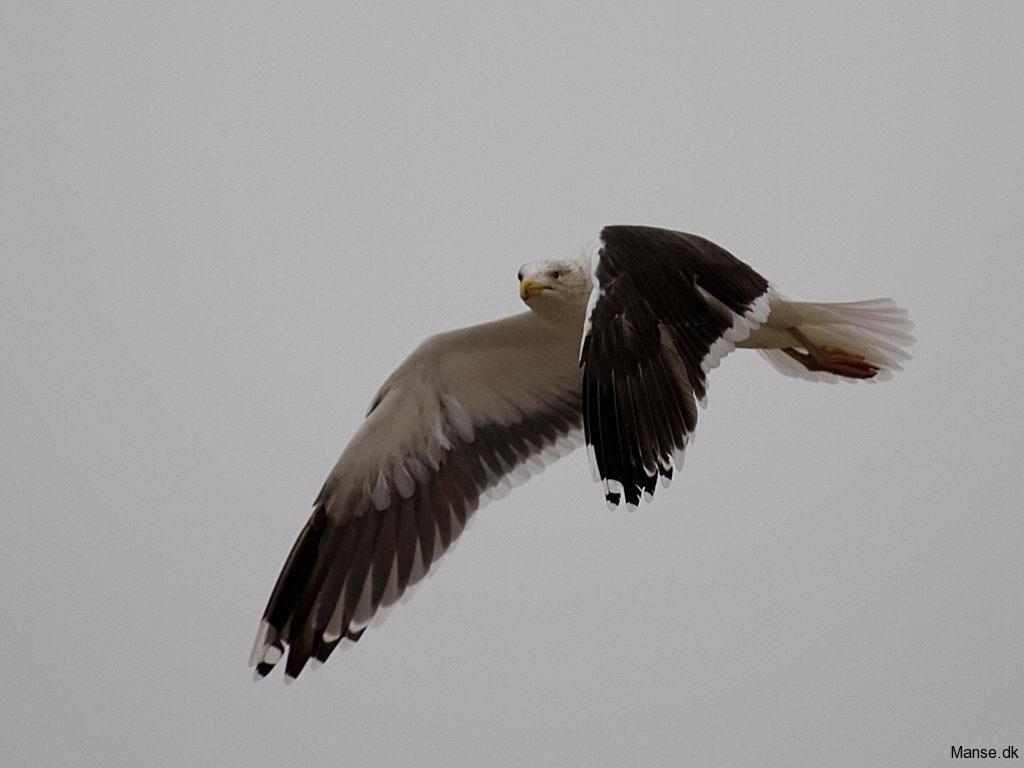 fugle_015