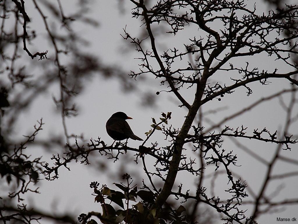 fugle_019
