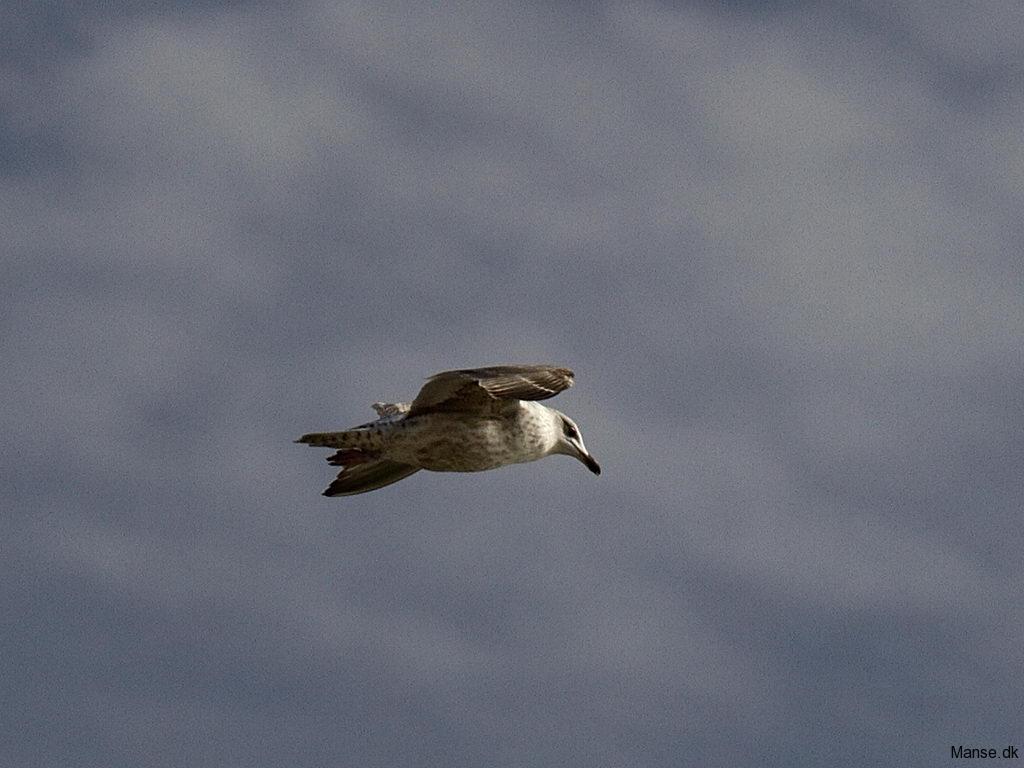 fugle_033