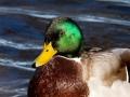 fugle_035