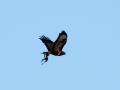 fugle_081