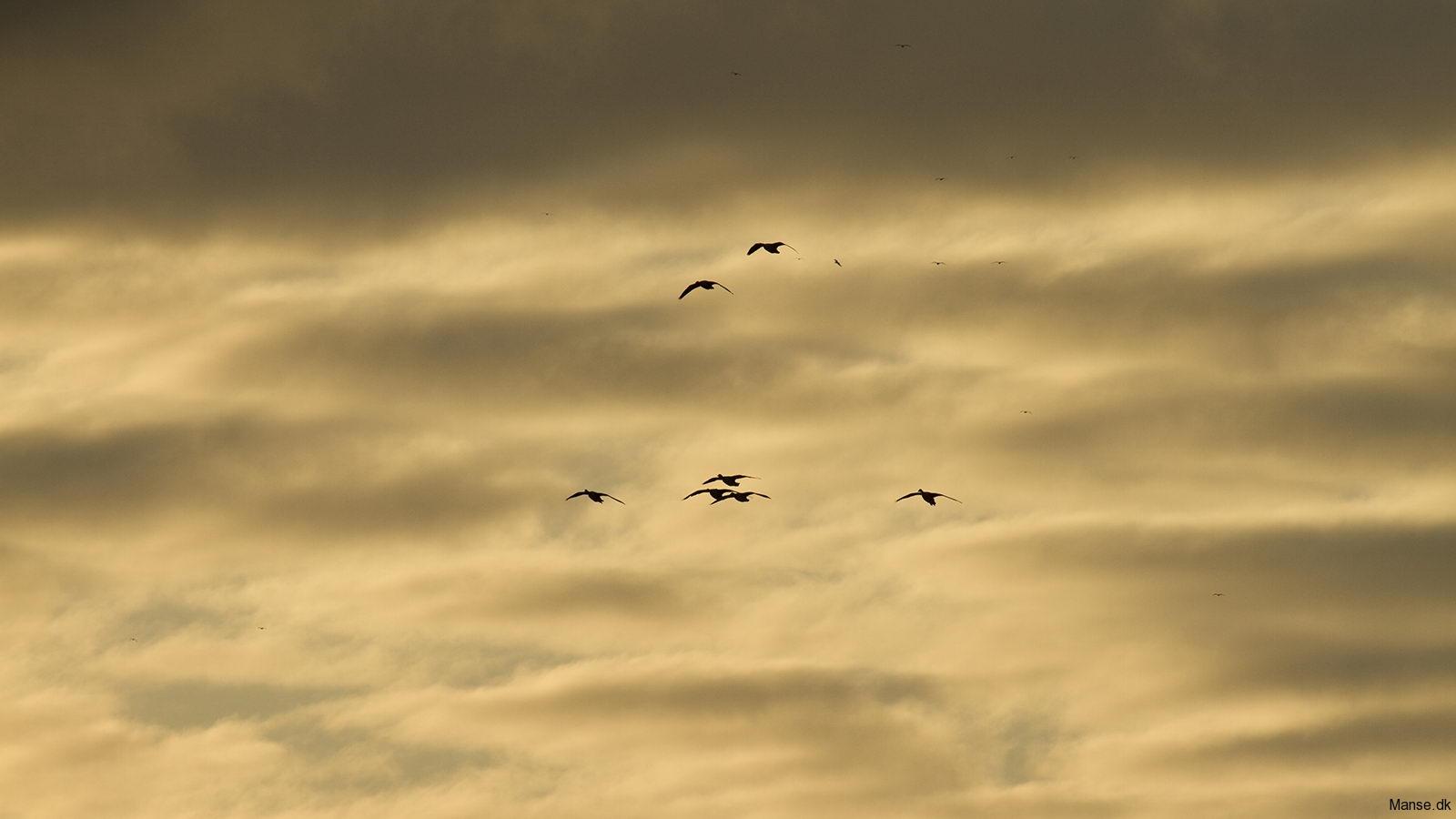 fugle_046