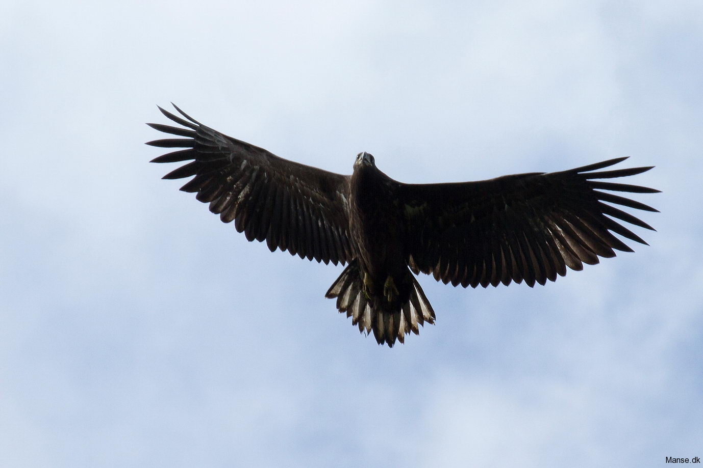 fugle_054