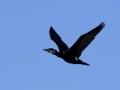 fugle_083
