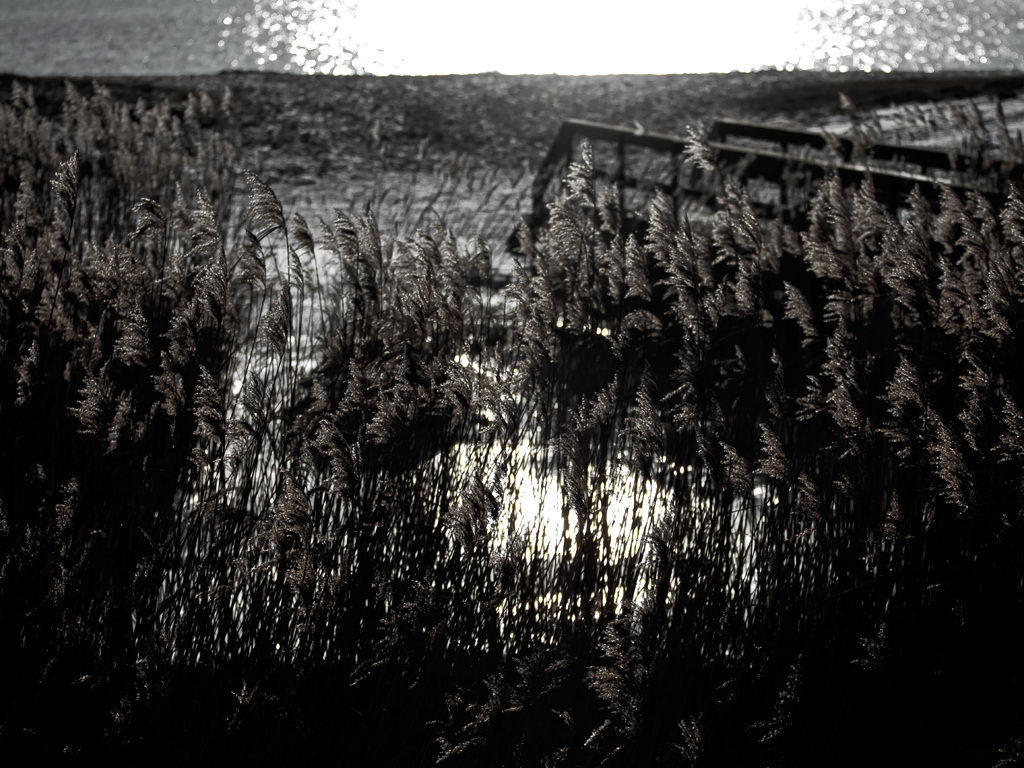 land_039